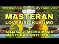 Masteran Terapi Masteran Lovebird Kusumo