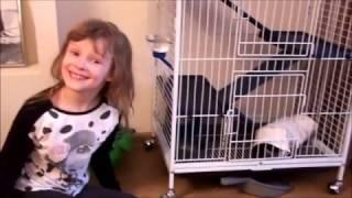 Звуки ШИНШИЛЛЫ - Как кричит шиншилла - Прикольное видео про животных