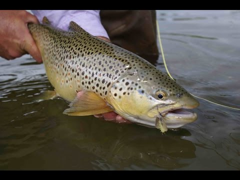 Ausable River Fly Fishing | Upstate New York