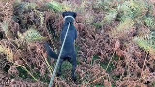 Teaching a dog to recall  come INSTANTLY when called. 100% REAL dog training. Clip 1raw material