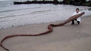 12 Морских Монстров, Выброшенных На Берег