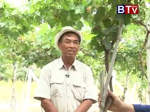 Cambodia Agriculture Mr  Sovandy Grape Farm in Kompong Speu