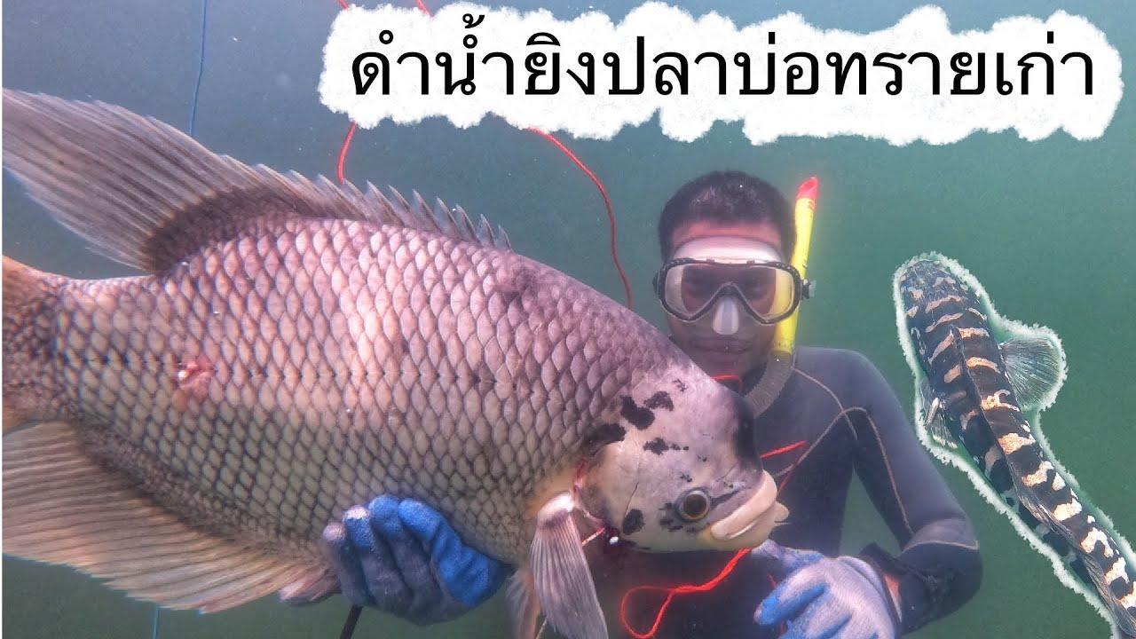 Ep:32 ดำน้ำยิงปลาบ่อทรายเก่า ยิงปลาแรดใหญ่ ปลาชะโด