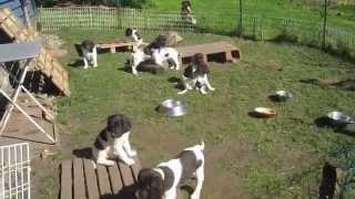 Une portée au Classique en partance chez le vétérinaire