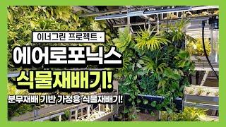 [수경재배] 에어로포닉스 식물재배기/식물공기청정기 그린…
