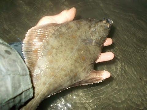 BARMOUTH Summer Flounder Estuary Fishing (June 2015)