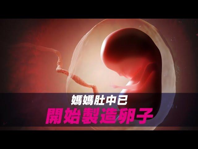 【養生教室vol.6】卵子 Q&A