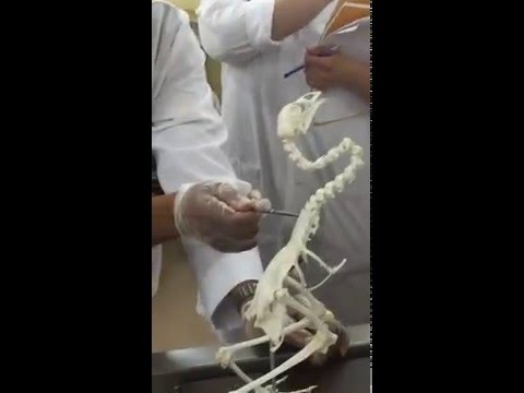 Anatomy II - Bird skeleton (Aire)