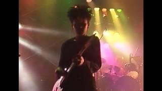 ザ・ミンクス - パッシュ 1989年1月15日 北海道 道心ホール.
