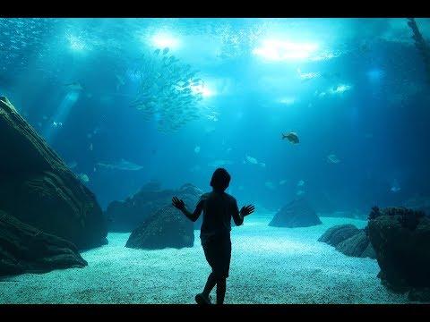 LISBON OCEANARIUM | VLOG #4