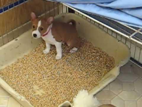 Dog Free Litter Box