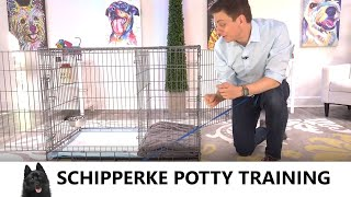 Schipperke Potty Training from WorldFamous Dog Trainer Zak George  Potty Train a Schipperke Puppy