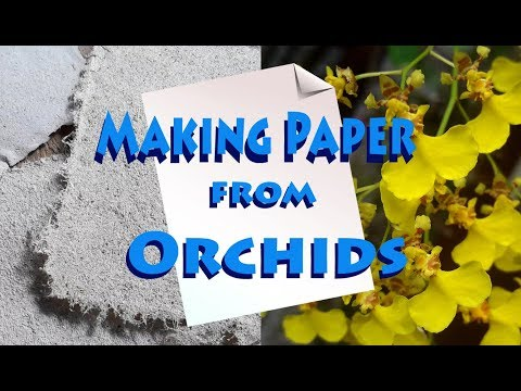 How to make paper from Orchids (And other plants)