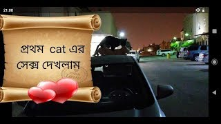 CATS MATING/ CATS HAVING SEX TOP OF CAR / ANIMAL MATING. FIRST TIME SEEN CATS SEX