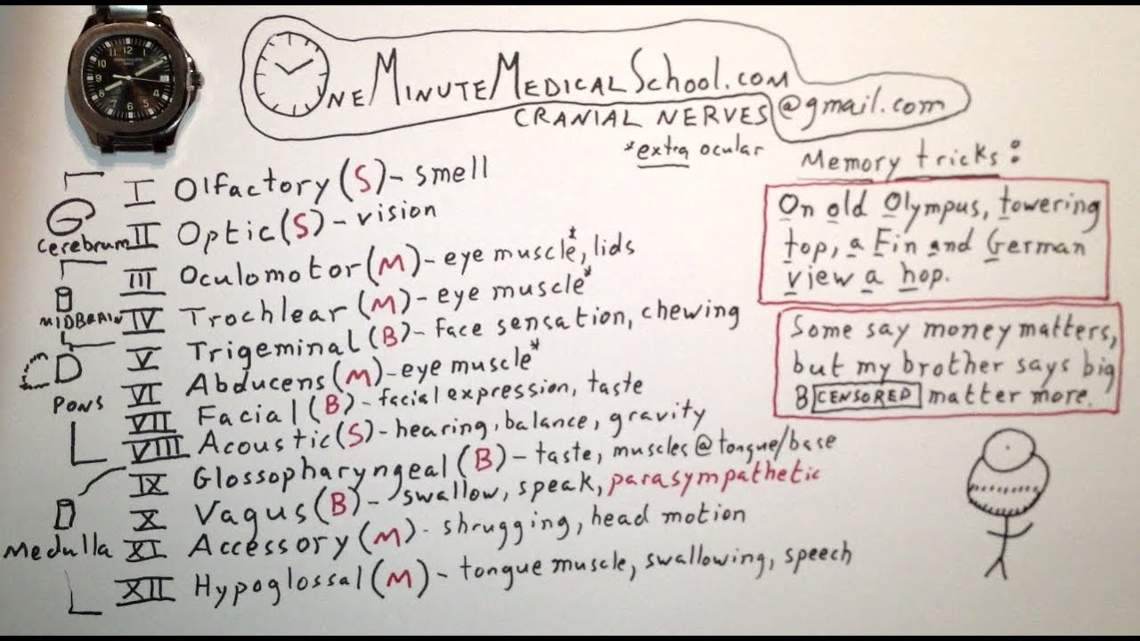 Cranial Nerves - One Minute Medical School - YouTube