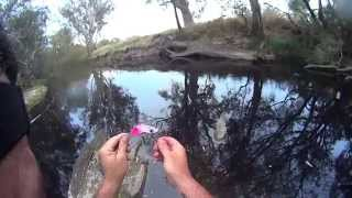Murray cod fishing. Cod Convention