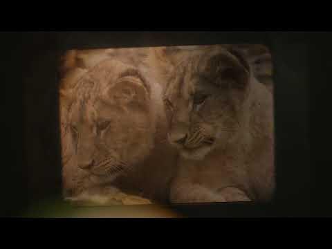PHOTOYAGE - Projection film Parc des Félins