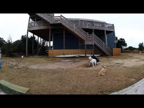 Dog Fail Video