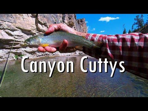 WBD- Fly Fishing Montana Canyon Cuttys