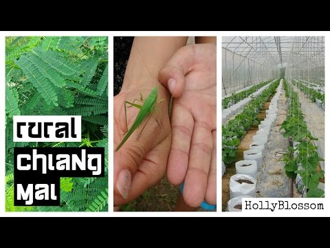 Organic Farm in Thailand