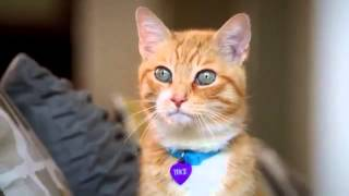 Sand Box Cat Commercial by The Shelter Pet Project