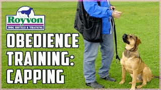 How To: Capping Dog Training And Obedience Training Work | Royvon