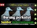 Burung Perkutut Sumber Keberuntungan Mitos Fakta  Mp3 - Mp4 Download