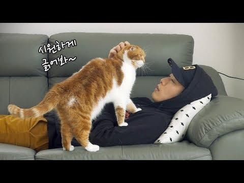 고양이들 앞에 누워있으면 생기는 상황들