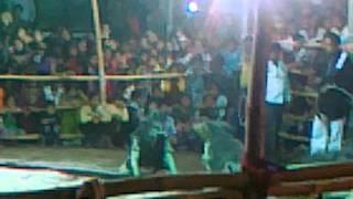Tiger Dance 2012 Bilaspur Chhattisgarh