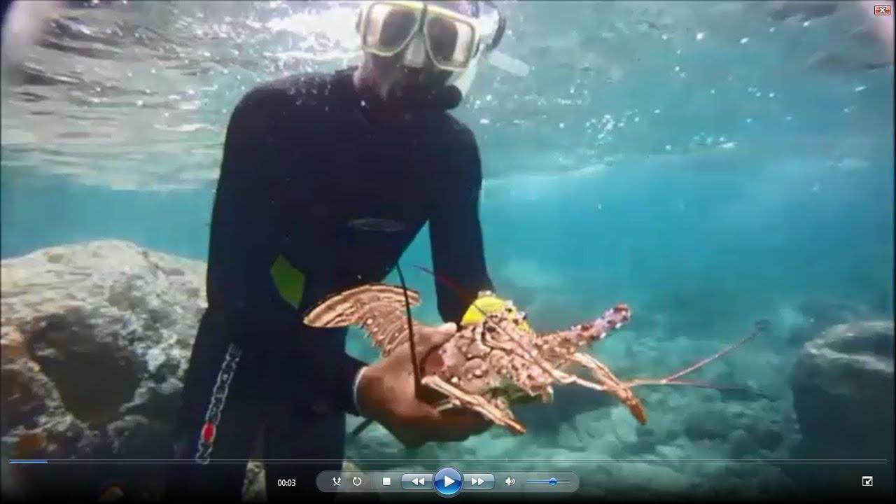 St Thomas Virgin Islands Spearfishing