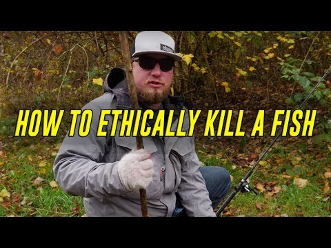 How To KILL A Fish - FASTEST & Most HUMANE WAY! (Bonus Gut & Fillet HOW TO)