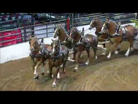 2017 Calgary Stampede Heavy Horse Show - World Six Horse Hitch