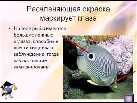 Раздел 3. Организм как биологическая система.