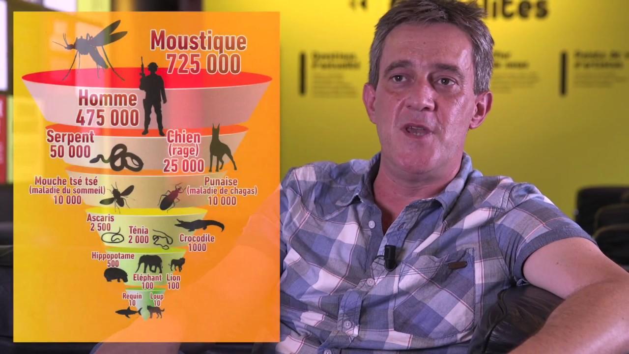 Interview l 39 indomptable moustique tigre 2 la lutte fr d ric simard youtube - Frederic le moustique ...