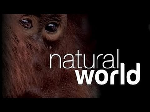 Natural World S16 E15 Fire And Ice An Icelandic Saga