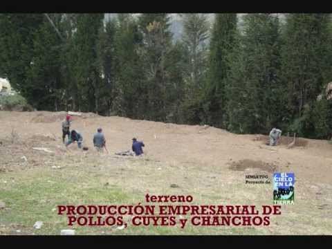 CONSTRUCCIÓN DE GALPÓN y CRÍA DE GALLINAS-PONEDORAS