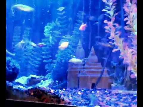 Glofish Tetra 25 gallon freshwater tropical aquarium