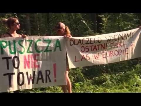 Puszcza Białowieska w obliczu łamania prawa