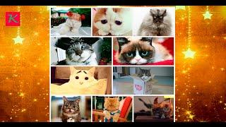Знаменитые коты интернета