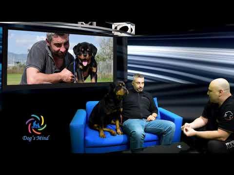 Rottweiler Ροτβάιλερ γνωρίζουμε την φυλή από τον εκτροφέα Ευγένιο Σταυρόπουλο! English Subtitles