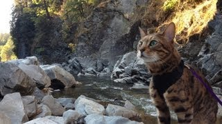 Day Hike With A Bengal Cat