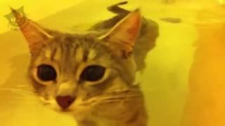 Кошки любят воду и хотят купаться ★ Смешные и забавные коты!