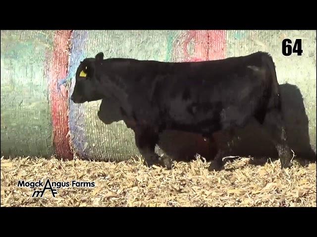 Mogck Angus Farms Lot 64
