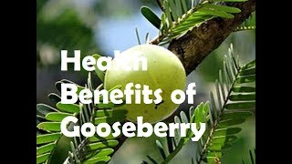 Amazing Health Benefits of Gooseberry