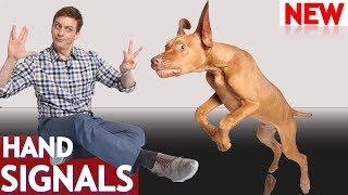 How to Teach Your Dog Hand Signals