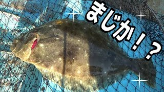 【衝撃】『あのエサ』を真下に落としたらヒラメが釣れた!!!