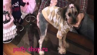 Свитер для собак Pinkaholic