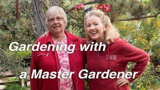 Gardening Fun with a Master Gardener   Borage, Peas, Roses   Vlog