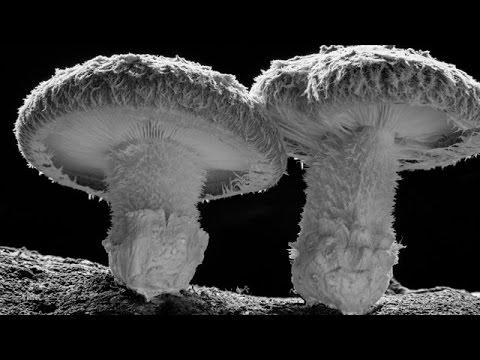 Doğada Büyüyen Mantar