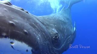 Download Closest whale encounters Mp3 and Videos